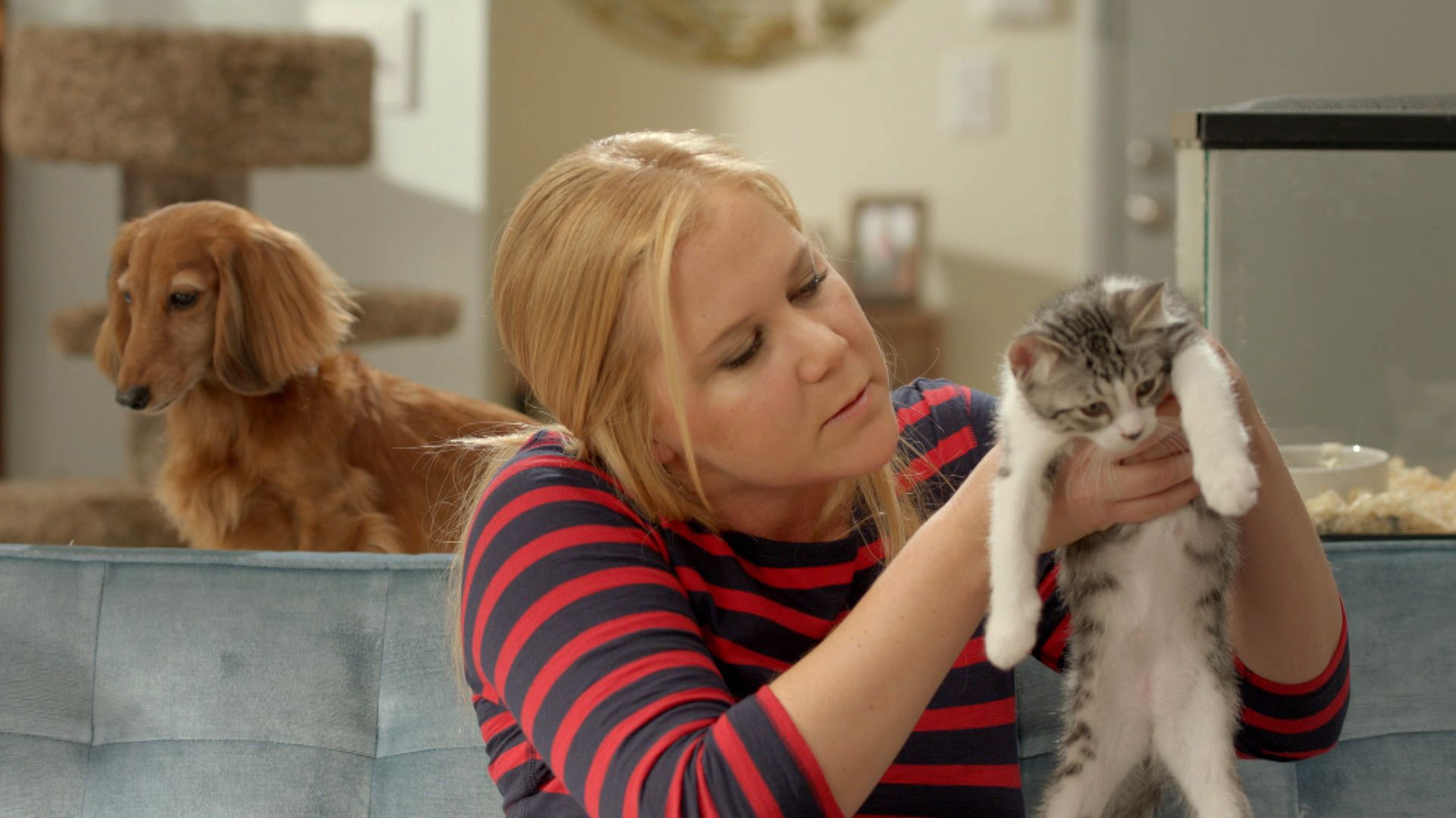 Animal Rescue Hotline Inside Amy Schumer Video Clip